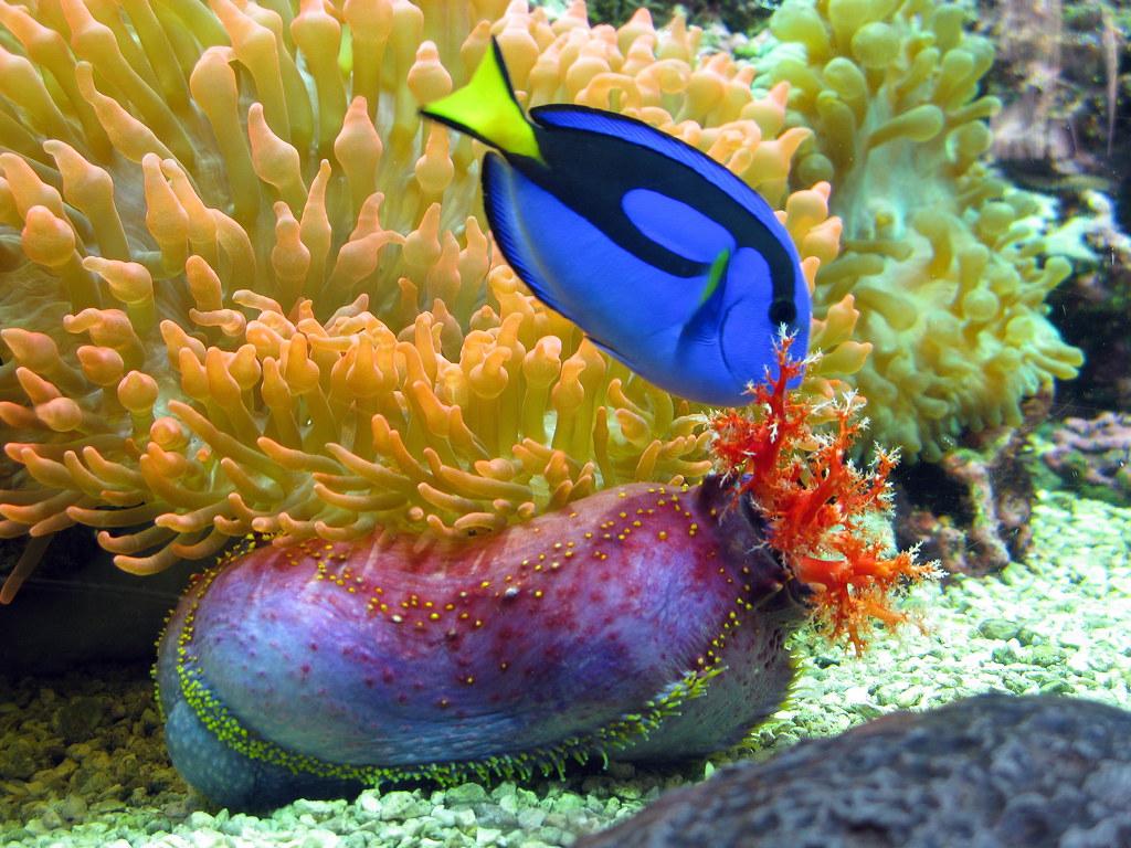 Image Result For Aquarium Denver