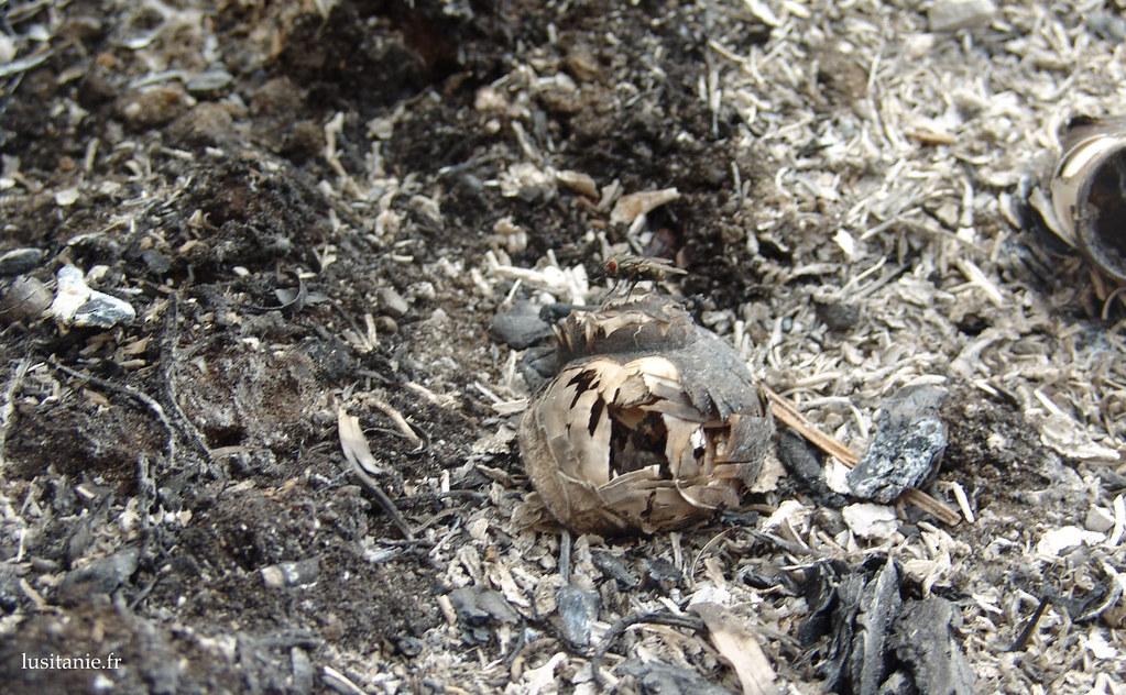 Gros plan sur les cendres