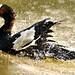 Fowl Bath
