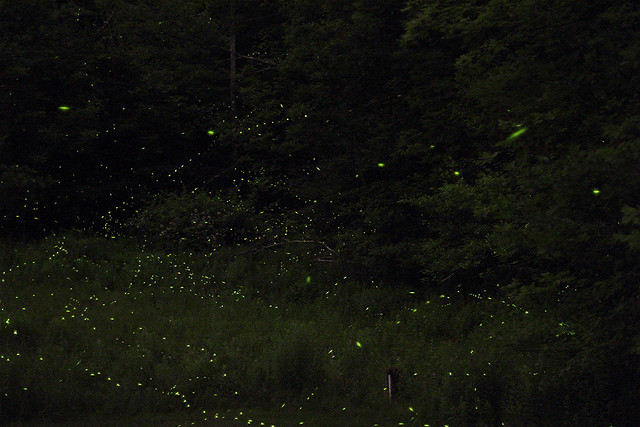 Catskills Fireflies (single exposure)