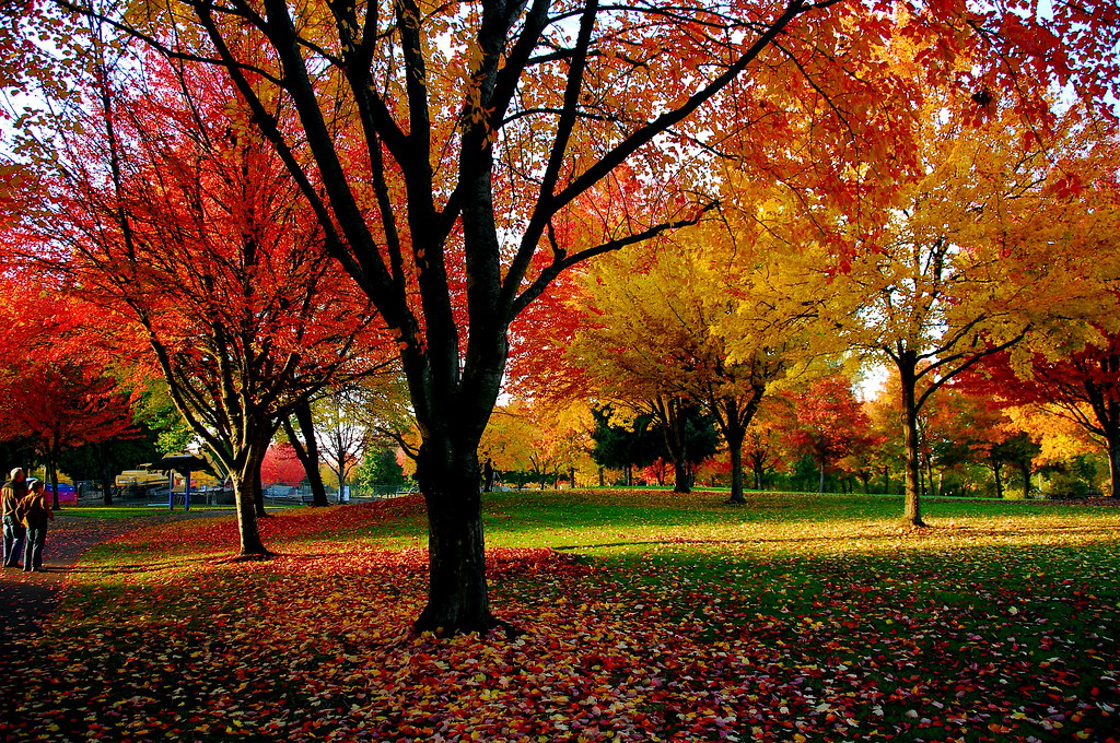 Pictures Of Autum: Fall Colors Of Eugene Parks