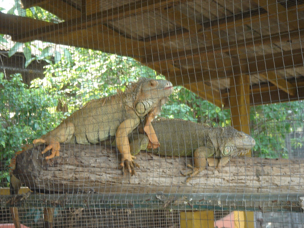 odense zoo rabat masage liste