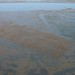Oyster beds in Willapa Bay