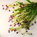 Crochet flowers - Myosotis sylvatica
