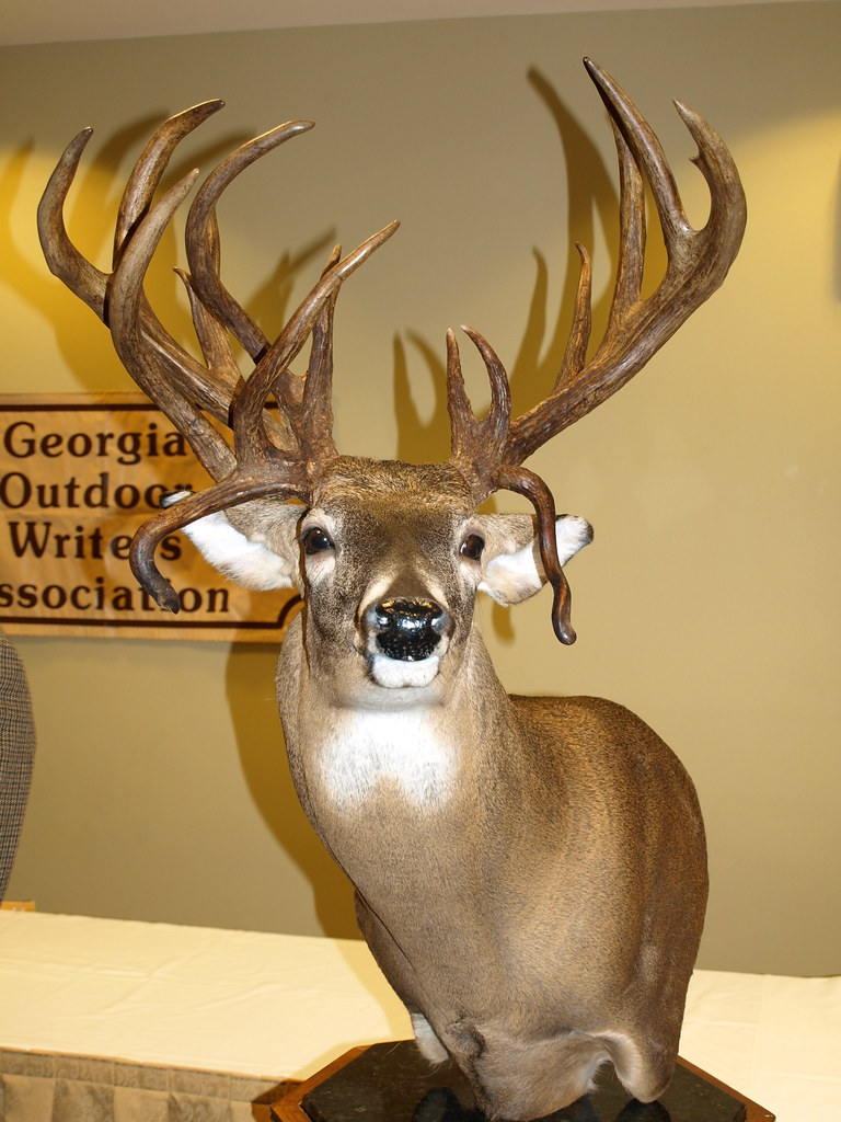 ga state record buck also in the atypical category 240