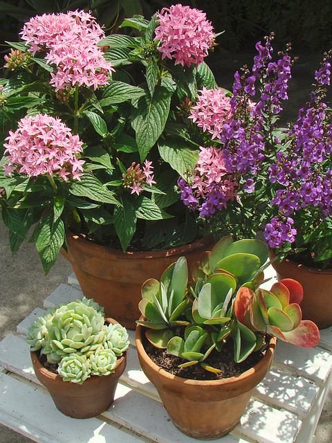 ... Patio Flowers U0026 Succulents | By Mondomuse