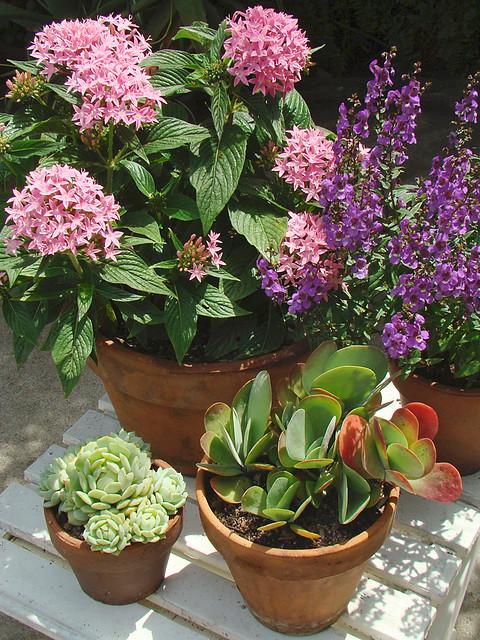 ... Patio Flowers U0026 Succulents | By Mondomuse