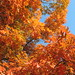 Fall Colors in Frankfort