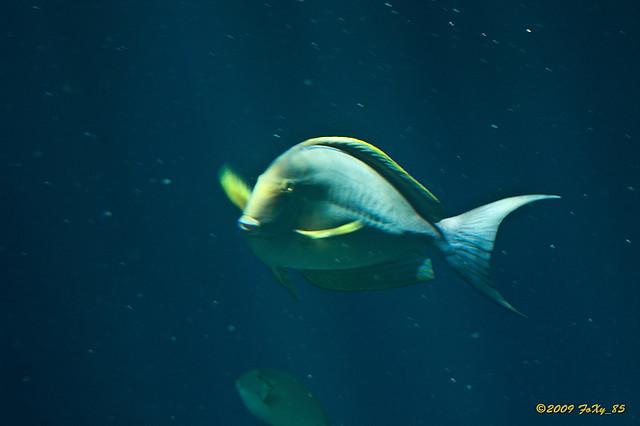 aquarium le septi 232 me continent talmont st hilaire 17 flickr