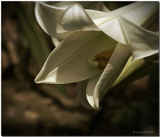 Lost in a flower / Perdido en una flor | by SantiMB.Photos