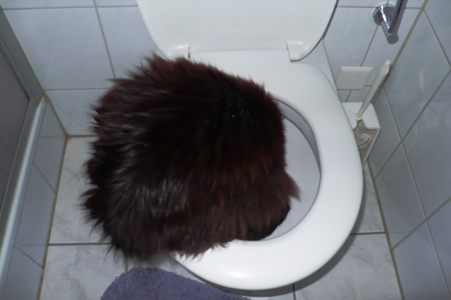 Nera drinking water from the toilet
