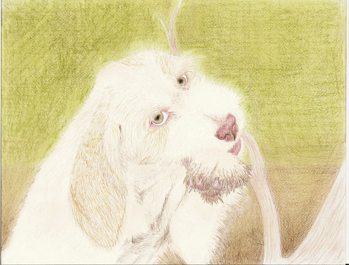 spinone puppy drawing | by CSBeck