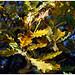 lafloresta_foglie