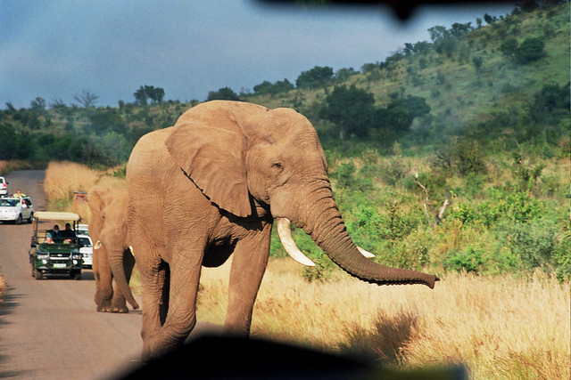 Elephant through the windscreen, Pilansberg, South Africa