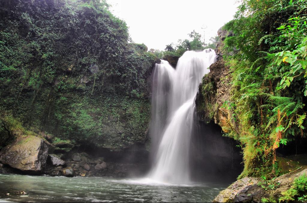 Natural Ecosystems Vs Man Made Ecosystems In Arthropod Diversity