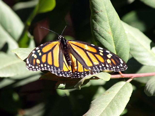 Monarch Homes Doon South Kitchener