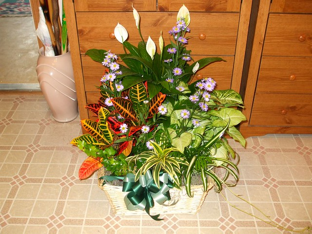 Image result for flowers delivery flickr