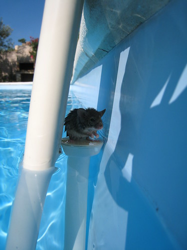 souris sur le thermometre de la piscine 1 bart cb flickr. Black Bedroom Furniture Sets. Home Design Ideas