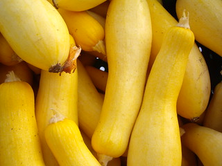 Yellow Squash | by swampkitty