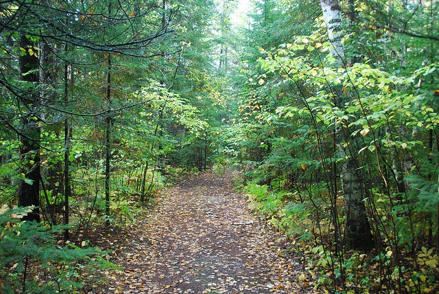 02 Wooded Trail In Baudette Lake Of The Woods School Fores