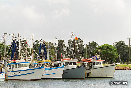 Commercial fishing boats newcastle nsw fishing trawlers for Commercial fishing jobs