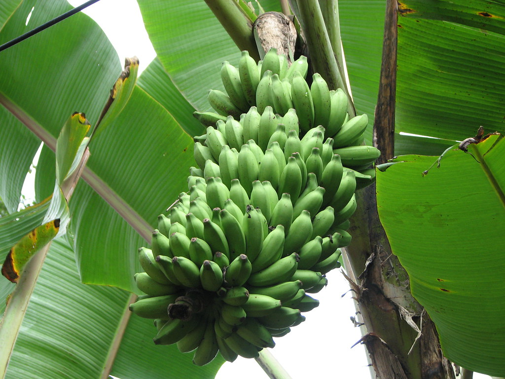 how to create uvs for a banana