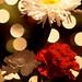 Christmas Flower Bokeh