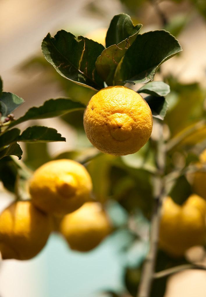 Limoni - Lemons