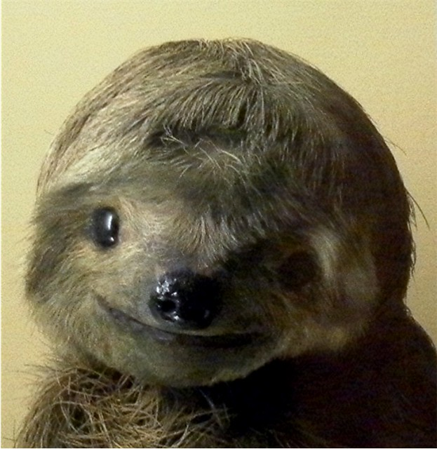 Sloth Smiling Smiling sloth