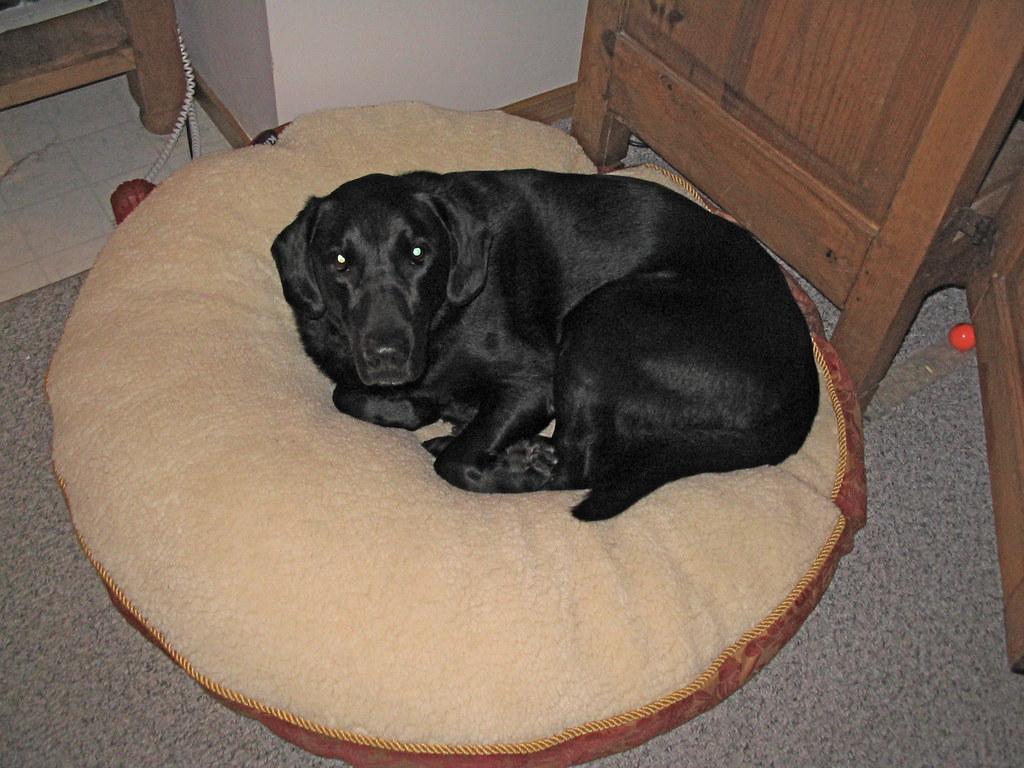 Dog Beds Com Au
