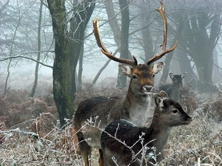 Chase Winter Deer | by johnmuk