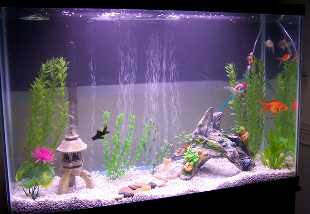 Aquarium Decorations For Cichlids