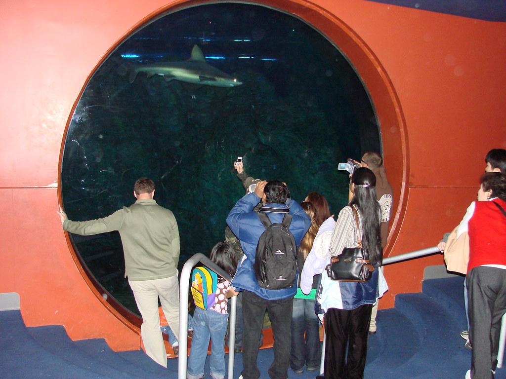 2008 03 16 Camden 019 New Jersey State Aquarium Allie