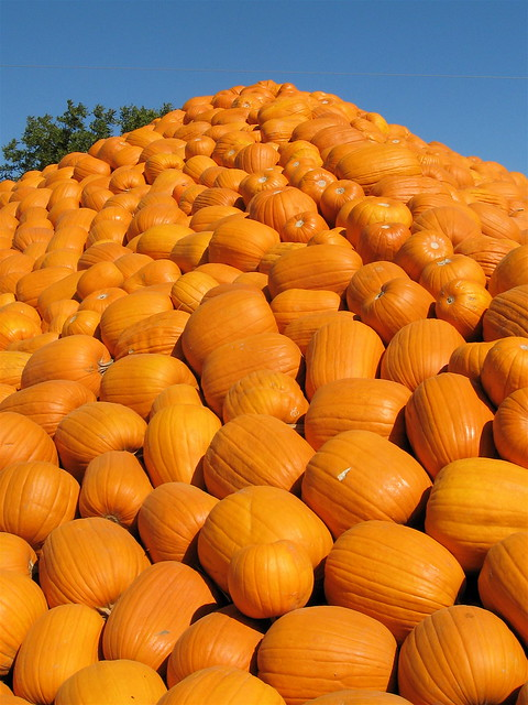 Morgan hill pumpkin patch ca