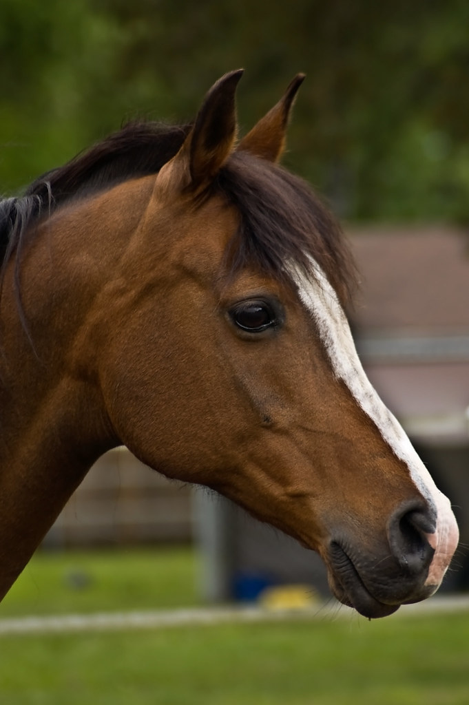 Side View of Beautiful Horse | This beautiful mare is the ...