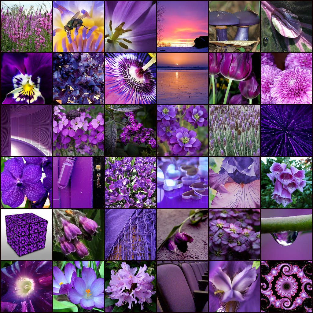 Purple 1 Pink And Purple 2 Www Flickr Com Photos