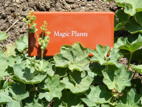 Magic Plants | by kc2gog
