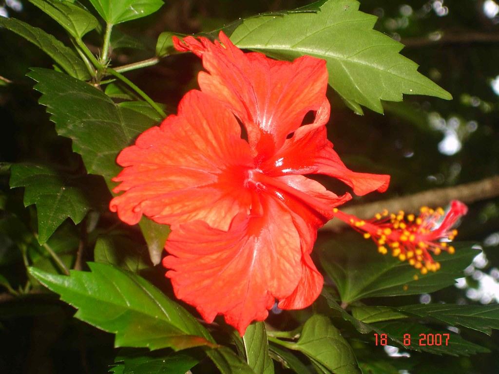 Flores Honduras Hotel El Jaral Santa Rita Copan