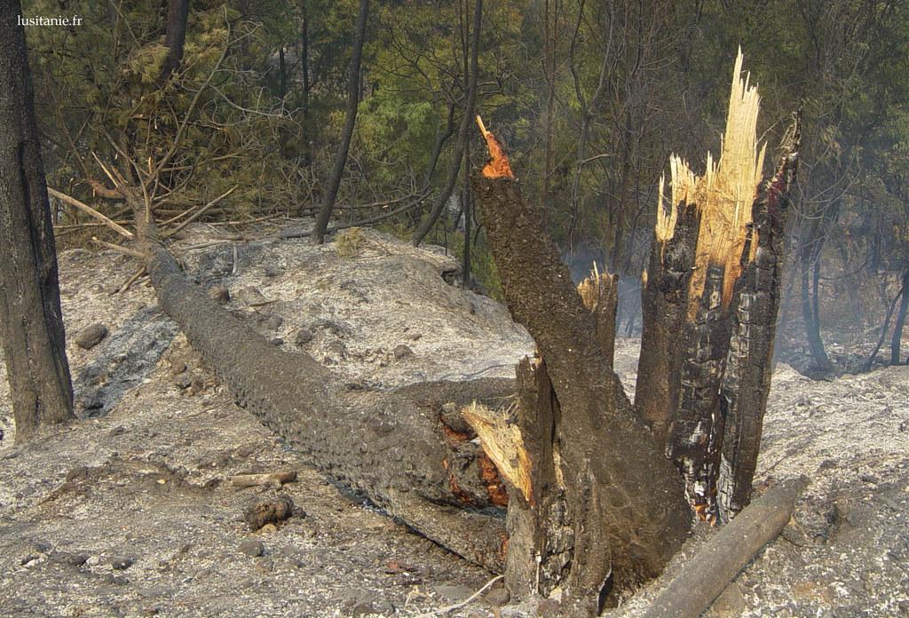 De nombreux arbres nont pas tenu le coup et ont fini par sabattre