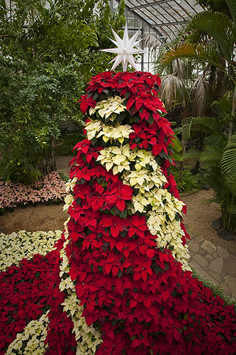 Poinsettia Christmas Tree Decorations Uk
