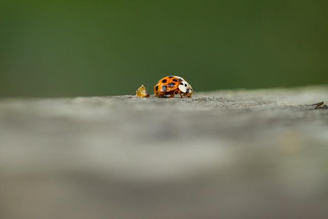 fantasy land ladybugs moons - photo #14