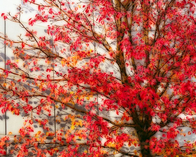 Image Result For Fall Tree With