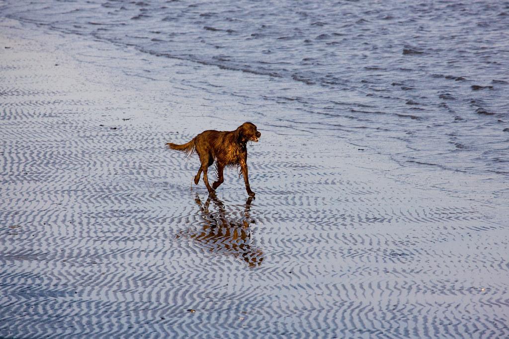 Murphy Dog Breed