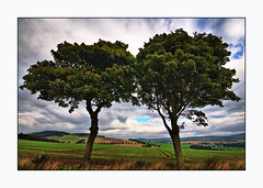 Two Trees Blowing in The Wind | by Magdalen Green Photography