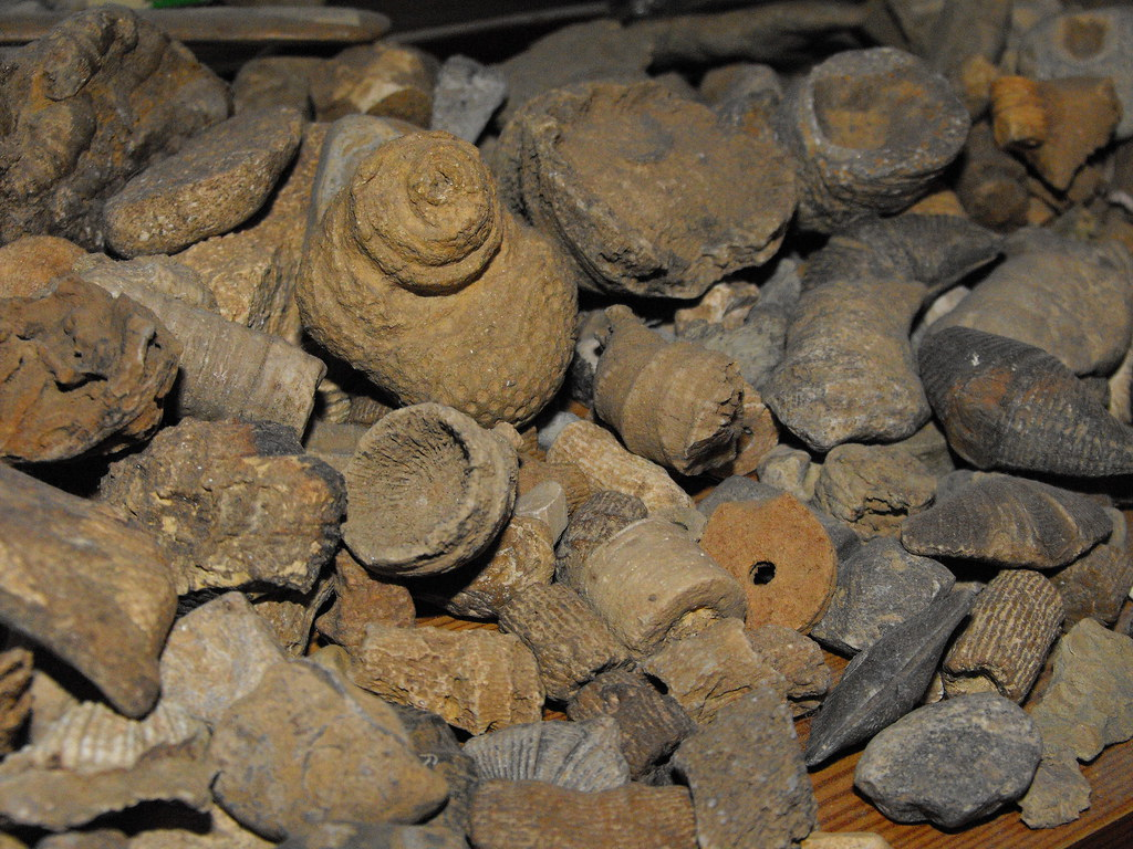 Indiana fossils | Here are some fossils I found in our ...