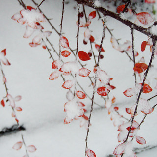 first snow in my garden | by Mari Hagen
