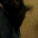 Cayley climbs my leg like a lumberjack