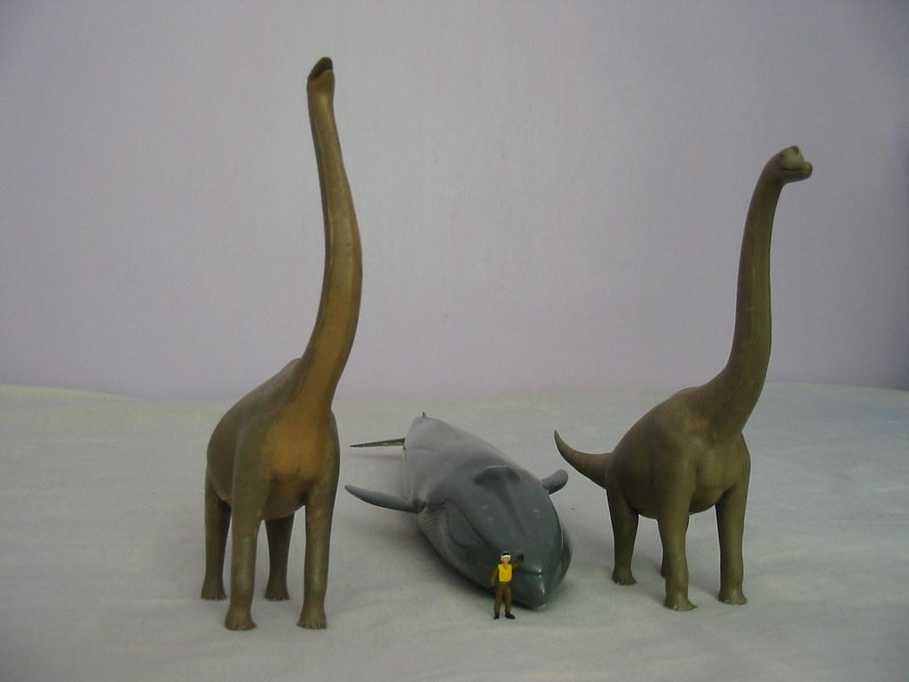 argentinosaurus blue whale and brachiosaurus janebirkin