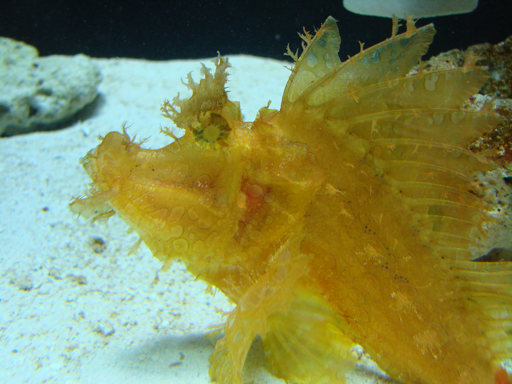 2008 03 16 Camden 038 New Jersey State Aquarium Allie