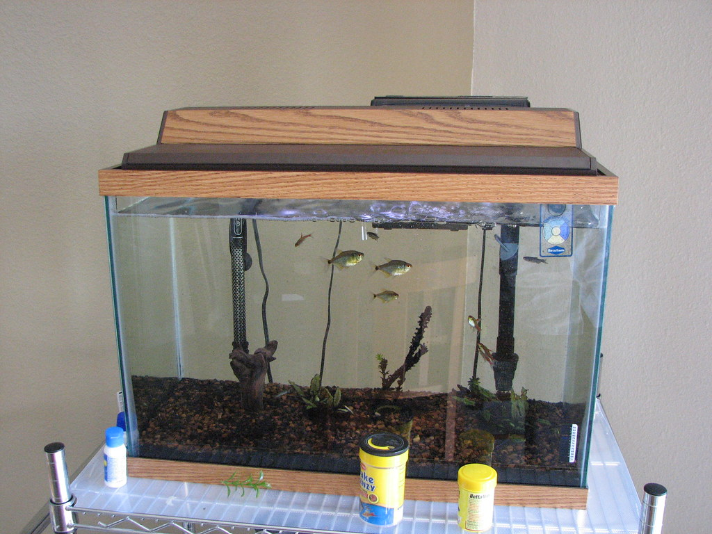 Fish tank selling fish 20 gallon tank heater filter for Fish tank with filter and heater